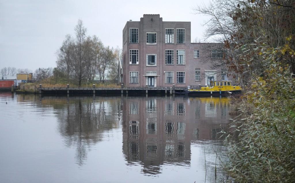 1 82-NL-NH-Zaandam-Kalf-2013-11-17-7